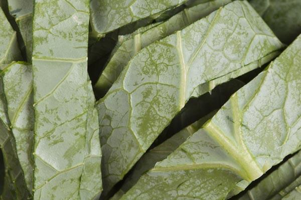 तेजी से बढ़ने के लिए कोलार्ड ग्रीन सब्जियां