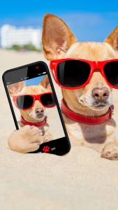 very funny wallpapers for phone lock screen download 2